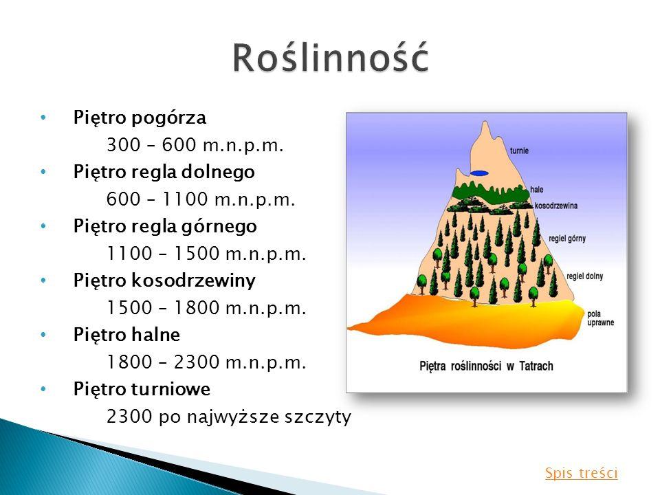 Piętro pogórza 300 – 600 m.n.p.m. Piętro regla dolnego 600 – 1100 m.n.p.m. Piętro regla górnego 1100 – 1500 m.n.p.m. Piętro kosodrzewiny 1500 – 1800 m