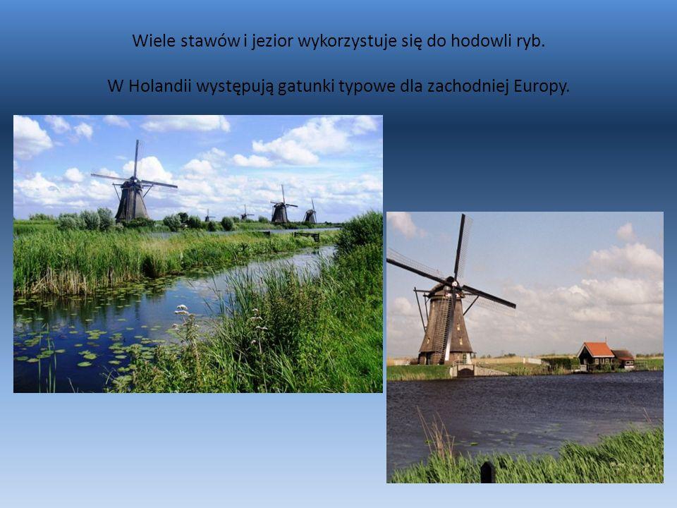 Wiele stawów i jezior wykorzystuje się do hodowli ryb. W Holandii występują gatunki typowe dla zachodniej Europy.