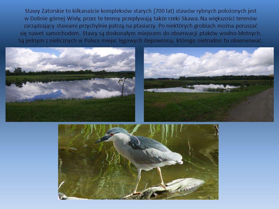 Łowisko wędkarskie Podolsze położone jest na trasie Zator-Smolice.
