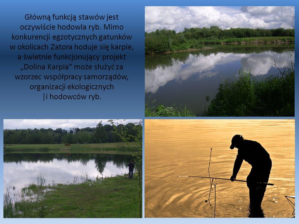 Skawa uchodzi do Wisły w okolicy wsi Smolice, tuż za znajdującym się tam stopniem wodnym wchodzącym w skład Drogi Wodnej Górnej Wisły.
