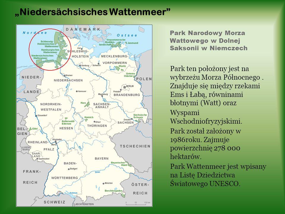 Park Narodowy Morza Wattowego w Dolnej Saksonii w Niemczech Park ten położony jest na wybrzeżu Morza Północnego. Znajduje się między rzekami Ems i Łab