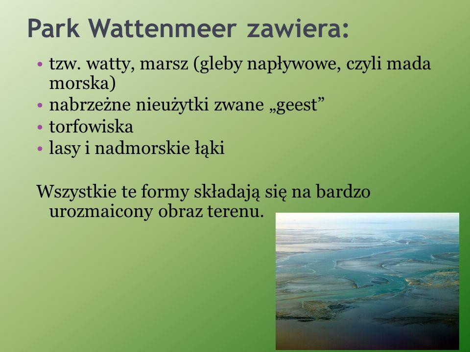 Park Wattenmeer zawiera: tzw. watty, marsz (gleby napływowe, czyli mada morska) nabrzeżne nieużytki zwane geest torfowiska lasy i nadmorskie łąki Wszy