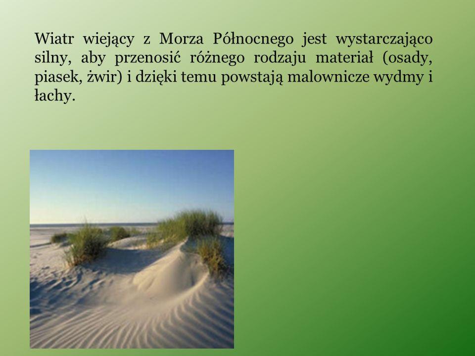 Wiatr wiejący z Morza Północnego jest wystarczająco silny, aby przenosić różnego rodzaju materiał (osady, piasek, żwir) i dzięki temu powstają malowni