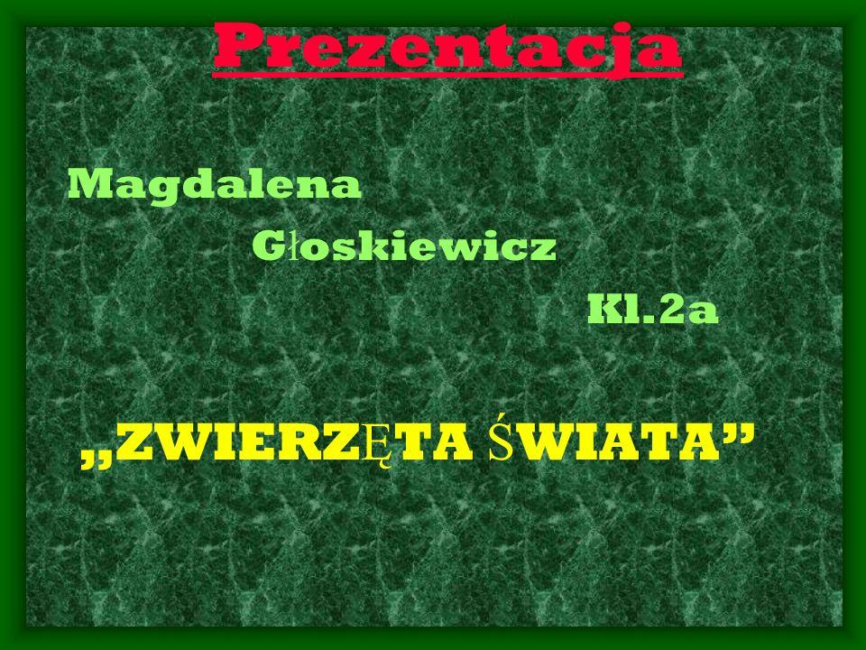 Prezentacja Magdalena G ł oskiewicz Kl.2a ZWIERZ Ę TA Ś WIATA