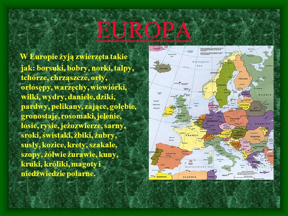 EUROPA W Europie żyją zwierzęta takie jak: borsuki, bobry, norki, talpy, tchórze, chrząszcze, orły, orłosępy, warzęchy, wiewiórki, wilki, wydry, danie