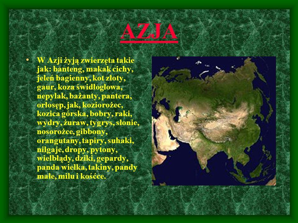 AZJA W Azji żyją zwierzęta takie jak: banteng, makak cichy, jeleń bagienny, kot złoty, gaur, koza świdłogłowa, nepylak, bażanty, pantera, orłosęp, jak