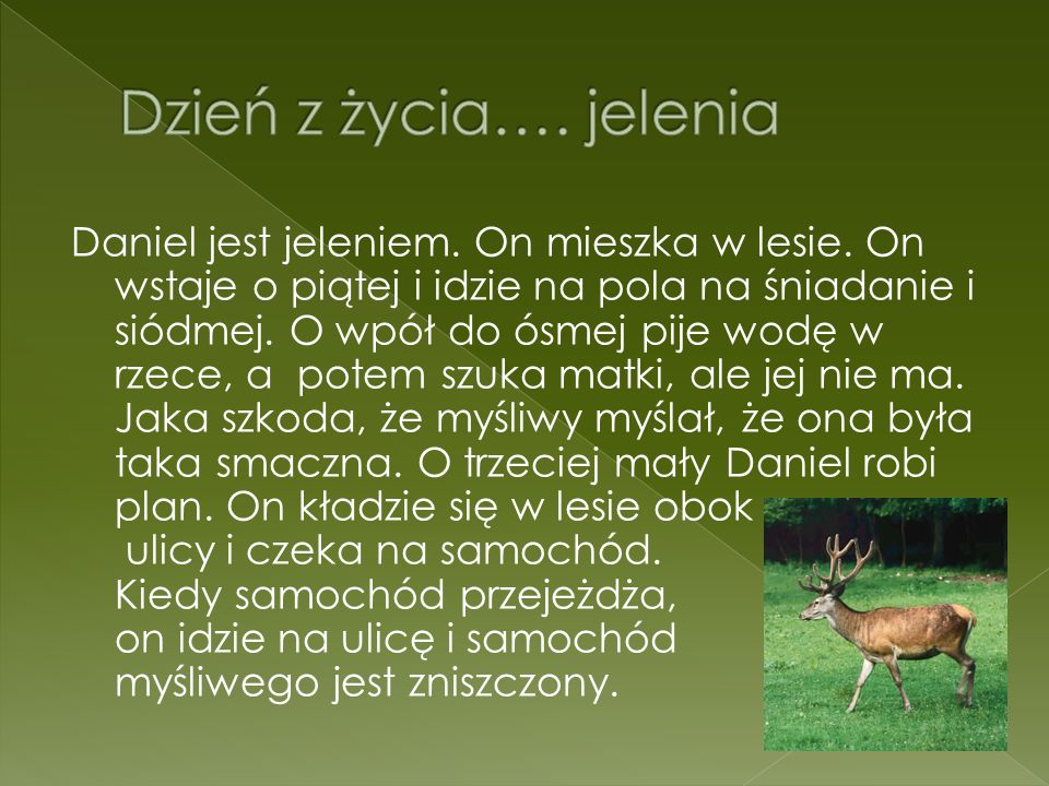 Daniel jest jeleniem. On mieszka w lesie. On wstaje o piątej i idzie na pola na śniadanie i siódmej. O wpół do ósmej pije wodę w rzece, a potem szuka