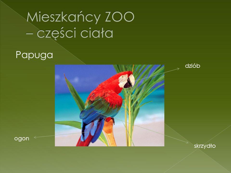 Papuga dziób skrzydło ogon