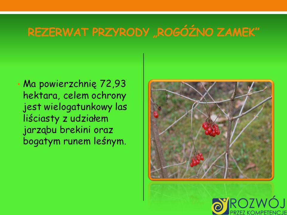 REZERWAT PRZYRODY ROGÓŹNO ZAMEK Ma powierzchnię 72,93 hektara, celem ochrony jest wielogatunkowy las liściasty z udziałem jarząbu brekini oraz bogatym runem leśnym.