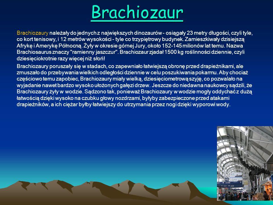 Brachiozaur Brachiozaury należały do jednych z największych dinozaurów - osiągały 23 metry długości, czyli tyle, co kort tenisowy, i 12 metrów wysokoś