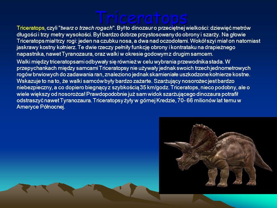 Triceratops Triceratops, czyli