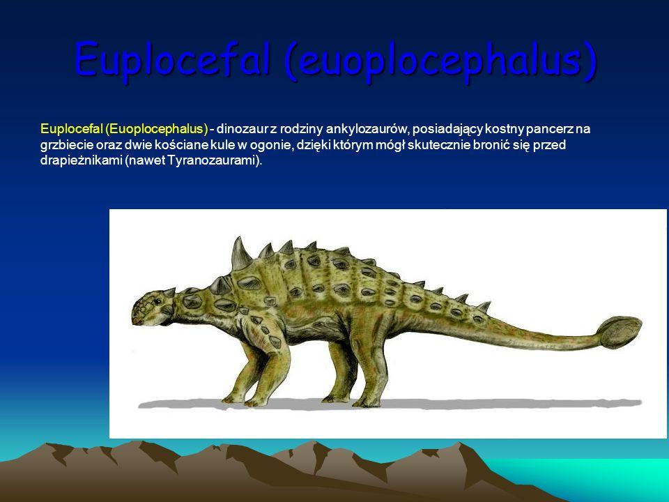 Euplocefal (euoplocephalus) Euplocefal (Euoplocephalus) - dinozaur z rodziny ankylozaurów, posiadający kostny pancerz na grzbiecie oraz dwie kościane