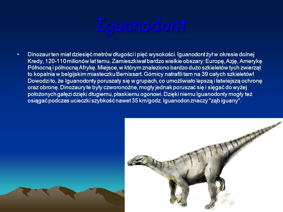 Iguanodont Dinozaur ten miał dziesięć metrów długości i pięć wysokości. Iguanodont żył w okresie dolnej Kredy, 120-110 milionów lat temu. Zamieszkiwał