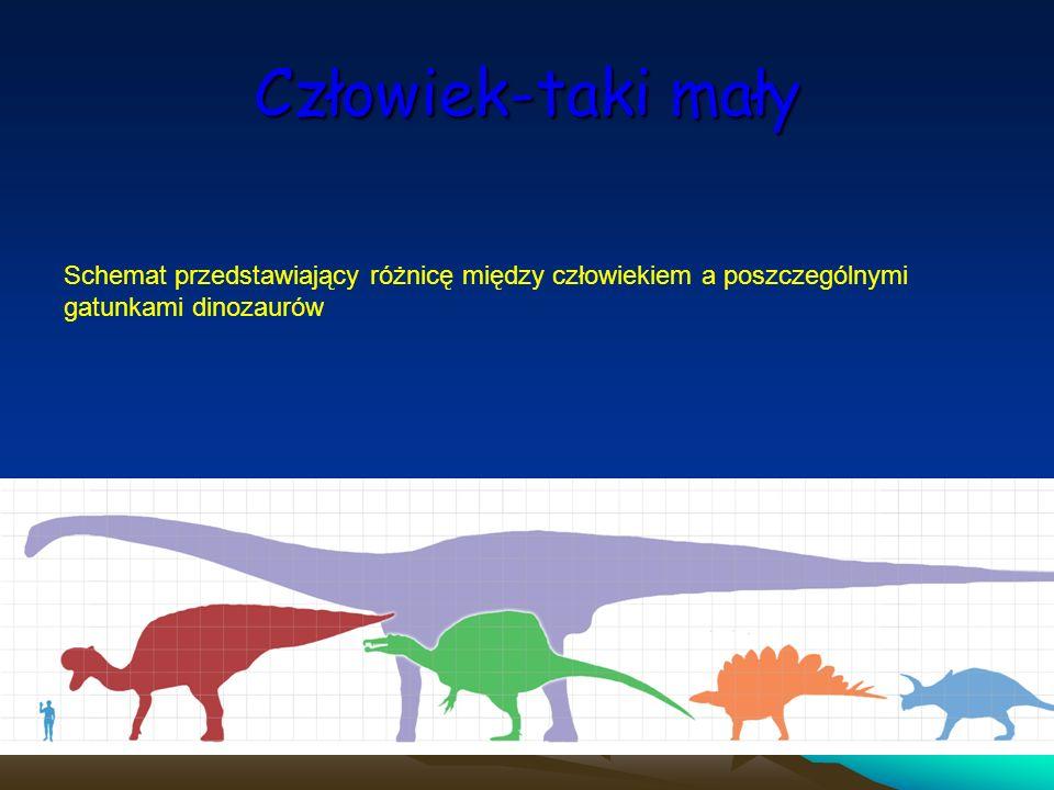 Człowiek-taki mały Schemat przedstawiający różnicę między człowiekiem a poszczególnymi gatunkami dinozaurów