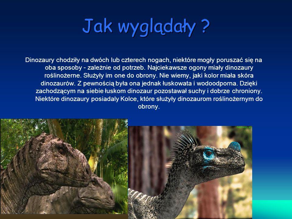 Jak wyglądały ? Dinozaury chodziły na dwóch lub czterech nogach, niektóre mogły poruszać się na oba sposoby - zależnie od potrzeb. Najciekawsze ogony