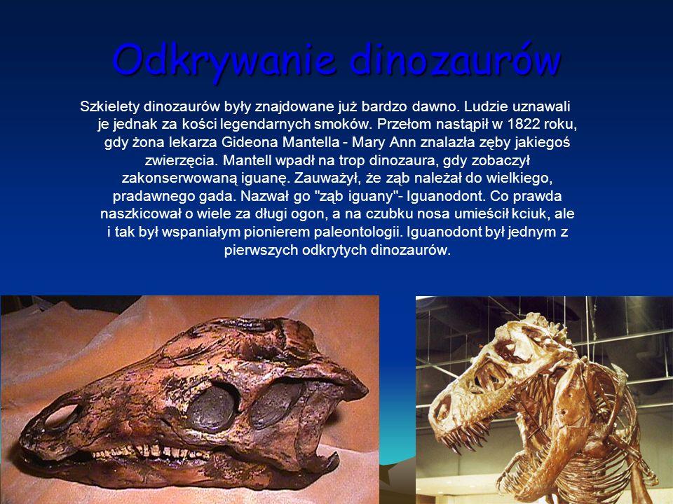 Odkrywanie dinozaurów Szkielety dinozaurów były znajdowane już bardzo dawno. Ludzie uznawali je jednak za kości legendarnych smoków. Przełom nastąpił