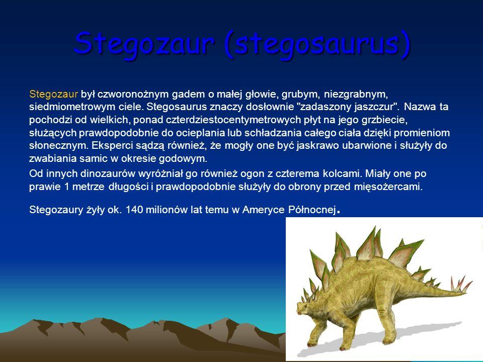 Stegozaur (stegosaurus) Stegozaur był czworonożnym gadem o małej głowie, grubym, niezgrabnym, siedmiometrowym ciele. Stegosaurus znaczy dosłownie