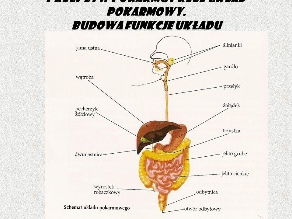 Przepływ pokarmu przez układ pokarmowy. Budowa funkcje układu pokarmowego.