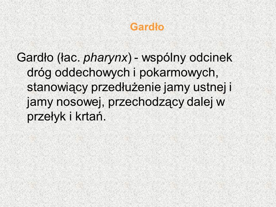 Gardło Gardło (łac.