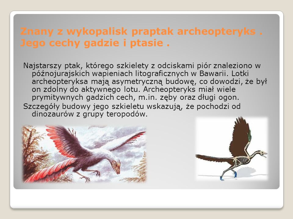 Znany z wykopalisk praptak archeopteryks. Jego cechy gadzie i ptasie. Najstarszy ptak, którego szkielety z odciskami piór znaleziono w późnojurajskich
