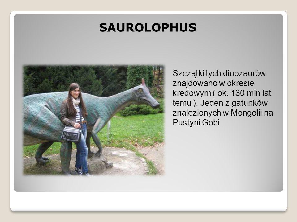 SAUROLOPHUS Szczątki tych dinozaurów znajdowano w okresie kredowym ( ok. 130 mln lat temu ). Jeden z gatunków znalezionych w Mongolii na Pustyni Gobi