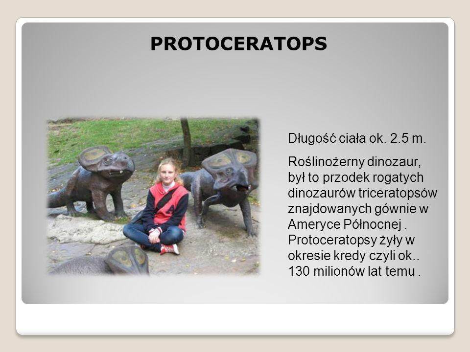 PROTOCERATOPS Długość ciała ok. 2.5 m. Roślinożerny dinozaur, był to przodek rogatych dinozaurów triceratopsów znajdowanych gównie w Ameryce Północnej