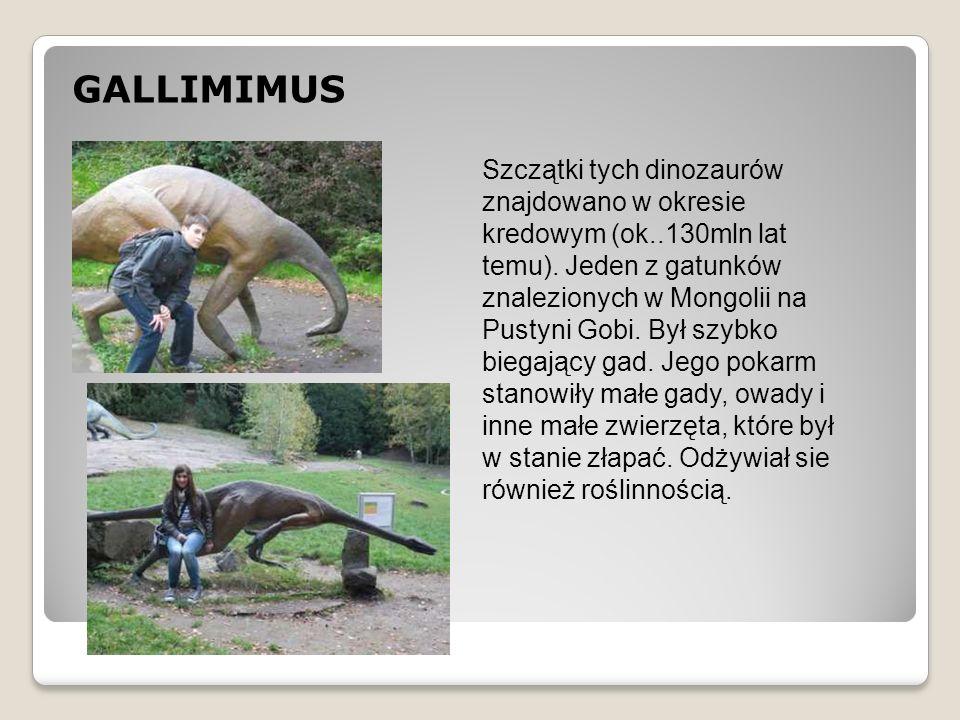 GALLIMIMUS Szczątki tych dinozaurów znajdowano w okresie kredowym (ok..130mln lat temu). Jeden z gatunków znalezionych w Mongolii na Pustyni Gobi. Był