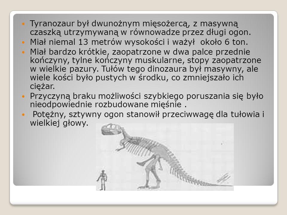 Tyranozaur był dwunożnym mięsożercą, z masywną czaszką utrzymywaną w równowadze przez długi ogon. Miał niemal 13 metrów wysokości i ważył około 6 ton.