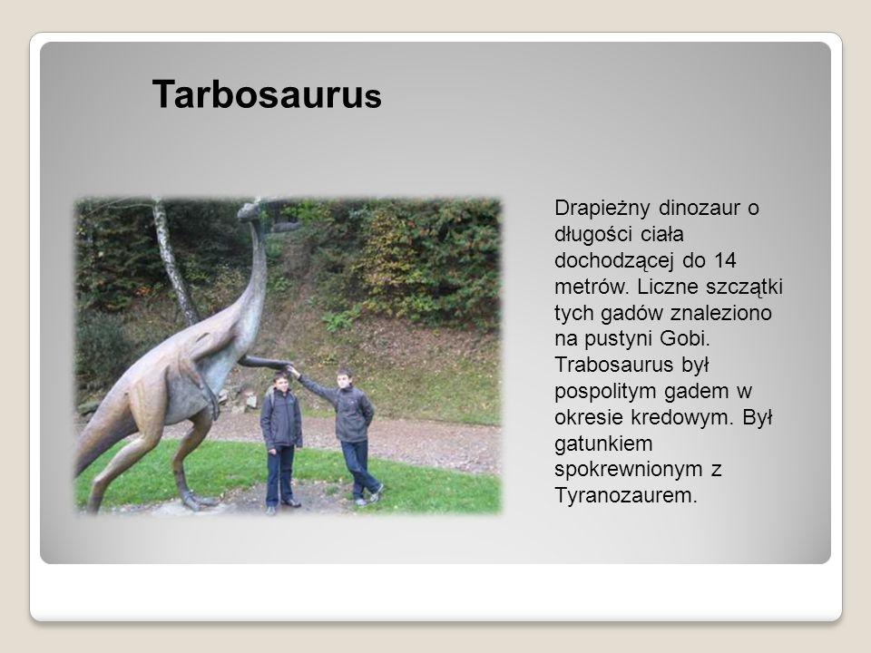 Tarbosauru s Drapieżny dinozaur o długości ciała dochodzącej do 14 metrów. Liczne szczątki tych gadów znaleziono na pustyni Gobi. Trabosaurus był posp