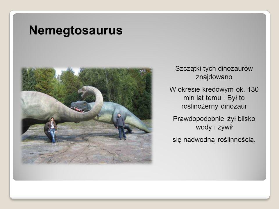 Nemegtosaurus Szczątki tych dinozaurów znajdowano W okresie kredowym ok. 130 mln lat temu. Był to roślinożerny dinozaur Prawdopodobnie żył blisko wody