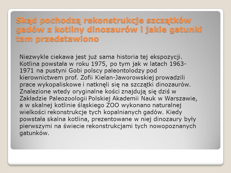 Skąd pochodzą rekonstrukcje szczątków gadów z kotliny dinozaurów i jakie gatunki tam przedstawiono Niezwykle ciekawa jest już sama historia tej ekspoz