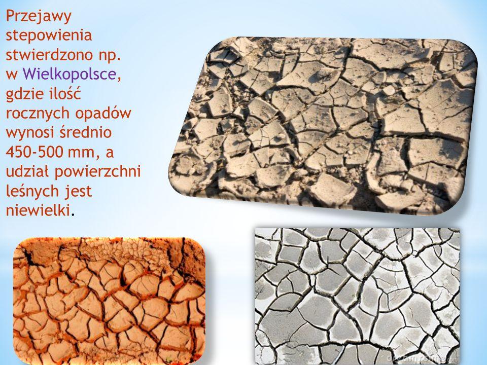 Przejawy stepowienia stwierdzono np. w Wielkopolsce, gdzie ilość rocznych opadów wynosi średnio 450-500 mm, a udział powierzchni leśnych jest niewielk