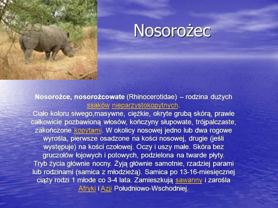 Nosorożec Nosorożec Nosorożce, nosorożcowate (Rhinocerotidae) – rodzina dużych ssaków nieparzystokopytnych. ssakównieparzystokopytnych Ciało koloru si