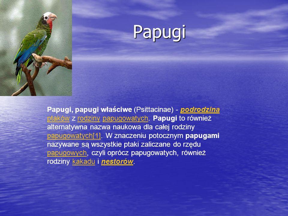 Papugi Papugi Papugi, papugi właściwe (Psittacinae) - podrodzina ptaków z rodziny papugowatych. Papugi to również alternatywna nazwa naukowa dla całej