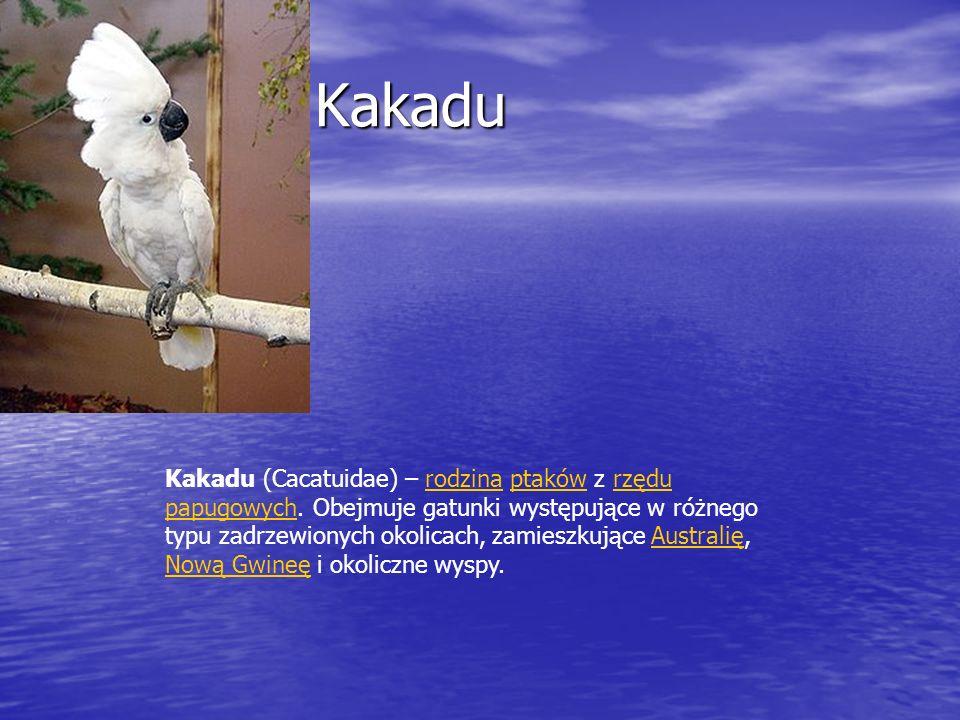 Kakadu Kakadu Kakadu (Cacatuidae) – rodzina ptaków z rzędu papugowych. Obejmuje gatunki występujące w różnego typu zadrzewionych okolicach, zamieszkuj