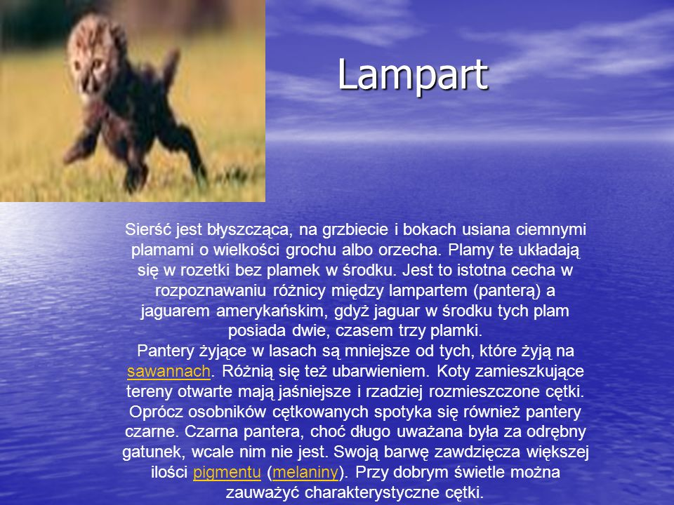 Żubr Żubr Żubr (Bison bonasus) – gatunek łożyskowca z rodziny krętorogich, rzędu parzystokopytnych.