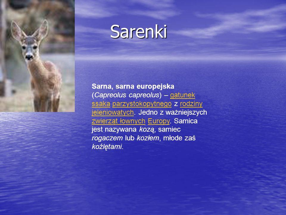 Sarenki Sarenki Sarna, sarna europejska (Capreolus capreolus) – gatunek ssaka parzystokopytnego z rodziny jeleniowatych. Jedno z ważniejszych zwierząt