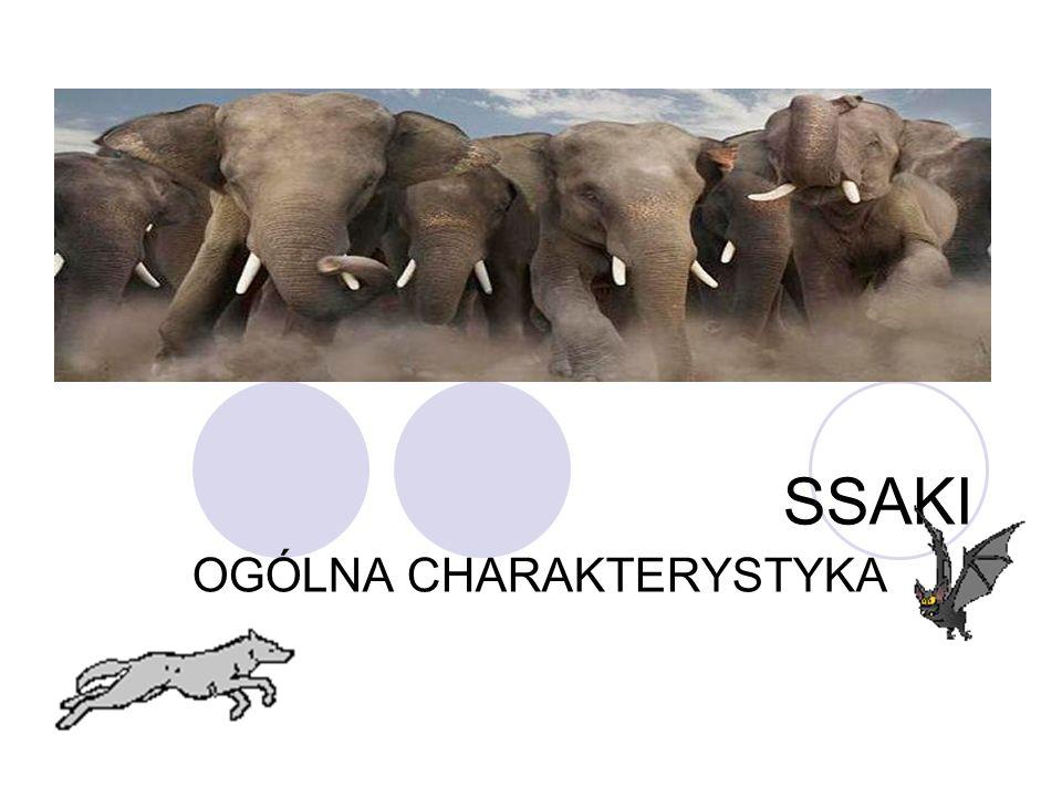 Źródła Google.pl Wikipedia.org atlas-zwierzat.pl