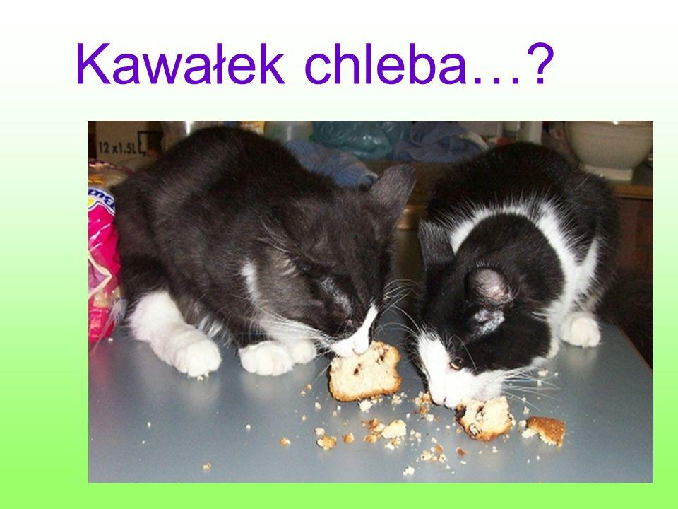 Kawałek chleba…?