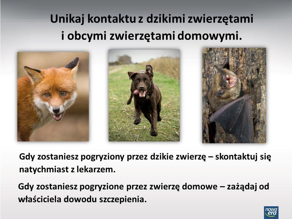Unikaj kontaktu z dzikimi zwierzętami i obcymi zwierzętami domowymi. Gdy zostaniesz pogryziony przez dzikie zwierzę – skontaktuj się natychmiast z lek