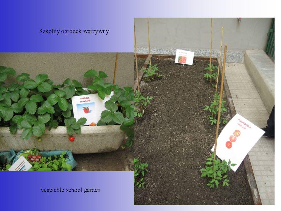Szkolny ogródek warzywny Vegetable school garden