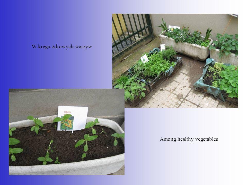 W kręgu zdrowych warzyw Among healthy vegetables