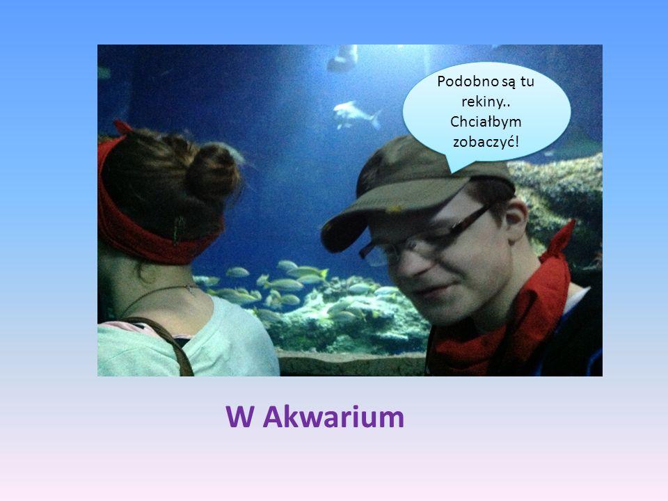 W Akwarium Podobno są tu rekiny.. Chciałbym zobaczyć! Podobno są tu rekiny.. Chciałbym zobaczyć!