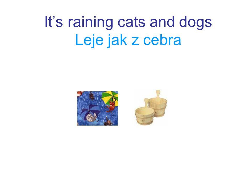 Its raining cats and dogs Leje jak z cebra