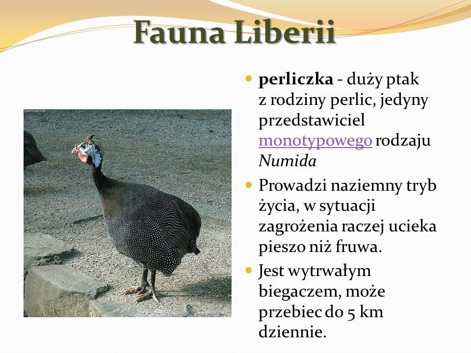 Fauna Liberii perliczka - duży ptak z rodziny perlic, jedyny przedstawiciel monotypowego rodzaju Numida monotypowego Prowadzi naziemny tryb życia, w s