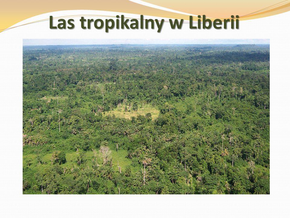 Las tropikalny w Liberii
