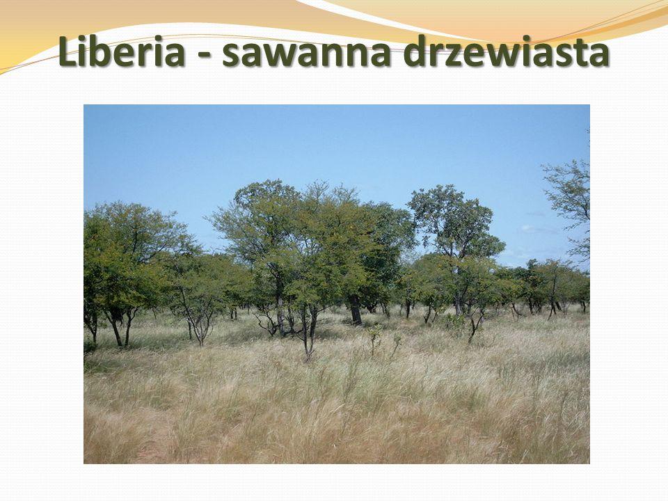 Liberia - sawanna drzewiasta