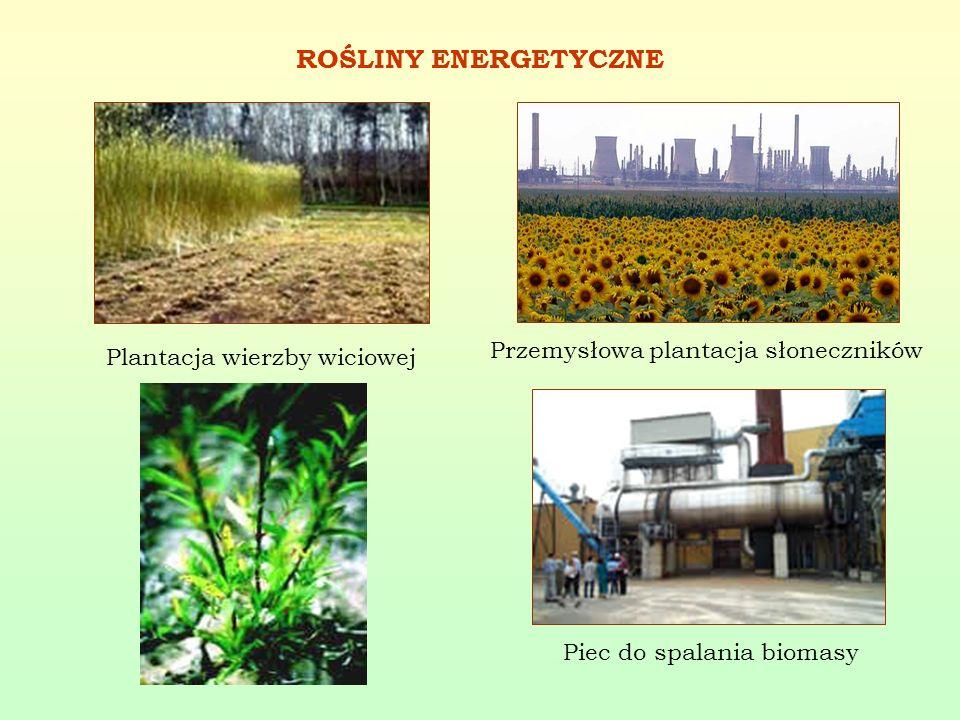 ROŚLINY ENERGETYCZNE Plantacja wierzby wiciowej Przemysłowa plantacja słoneczników Piec do spalania biomasy