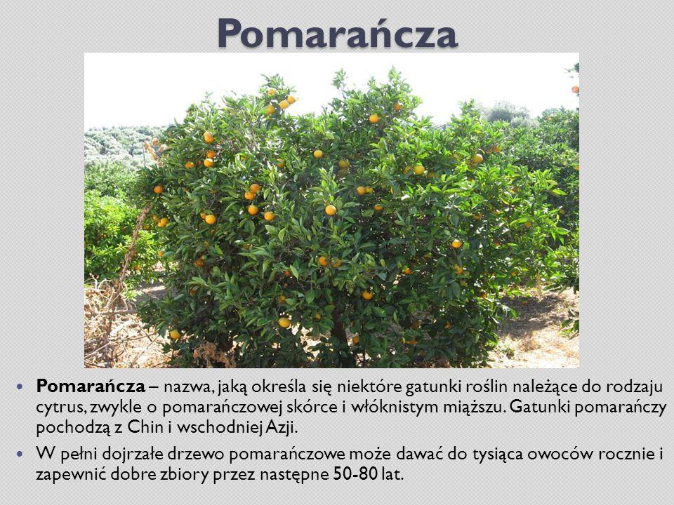 Pomarańcza Pomarańcza – nazwa, jaką określa się niektóre gatunki roślin należące do rodzaju cytrus, zwykle o pomarańczowej skórce i włóknistym miąższu