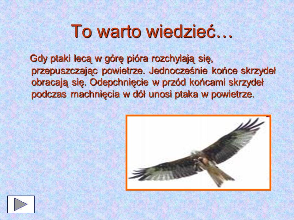 To warto wiedzieć… Gdy ptaki lecą w górę pióra rozchylają się, przepuszczając powietrze. Jednocześnie końce skrzydeł obracają się. Odepchnięcie w przó